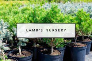 Lamb's Nursery